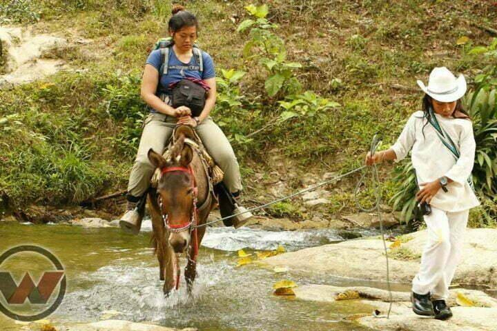 transporte en mulas ciudad perdida